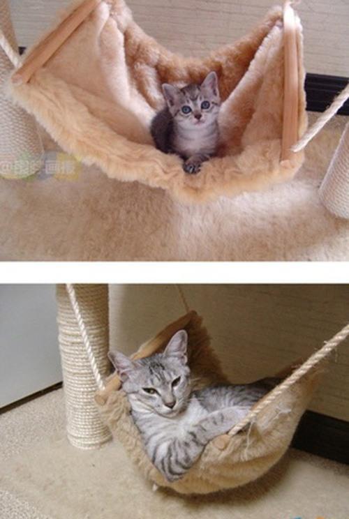 Кошки: тогда и теперь