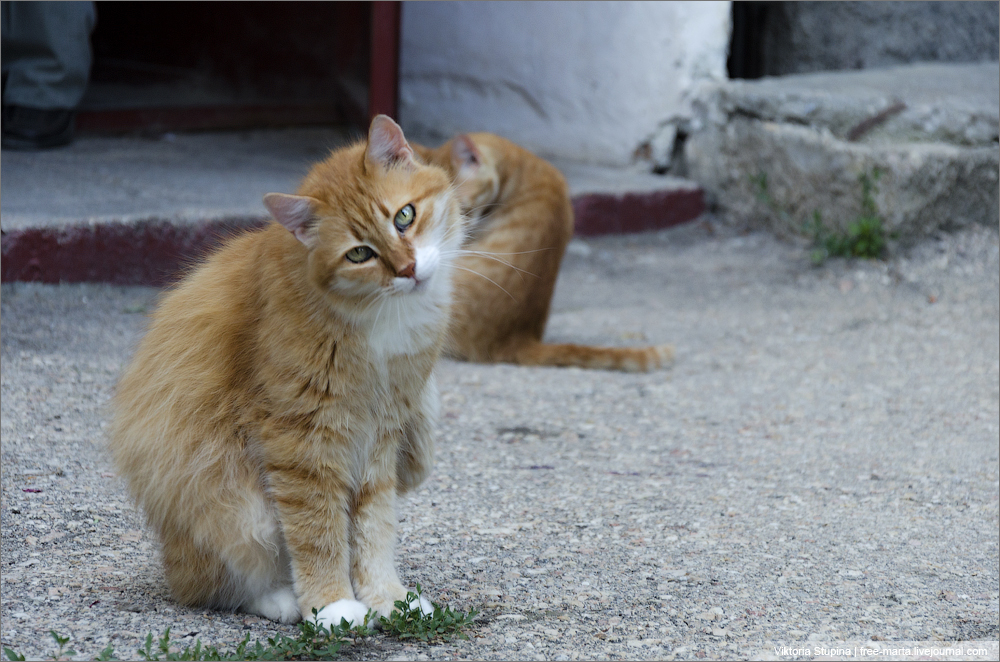 Кошки - очарование моё