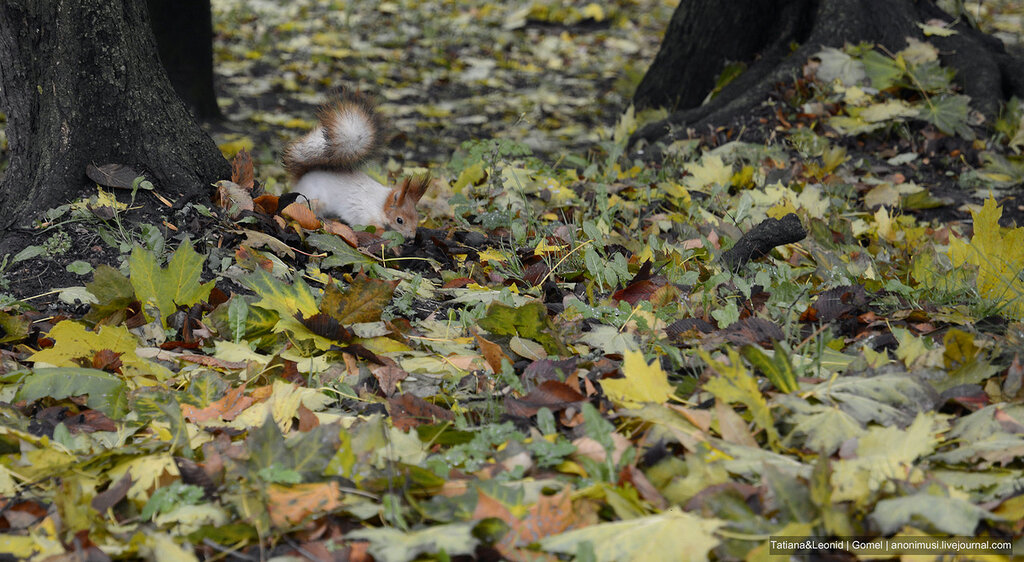 Осень в Гомельском парке
