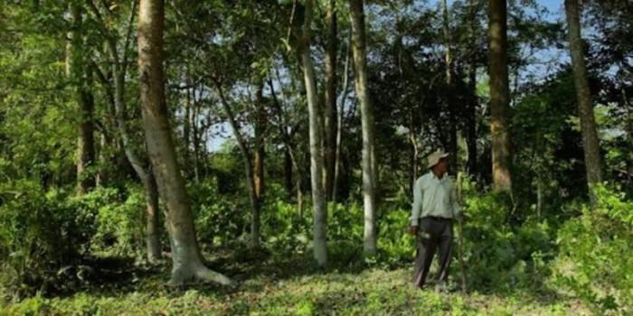 Житель Индии высадил лес, который позже превратился в заповедник