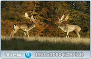 Дикая природа Скандинавии / Wildes Skandinavien / Wild Scandinavia (2011/BDRip/1080p/720p/HDRip)