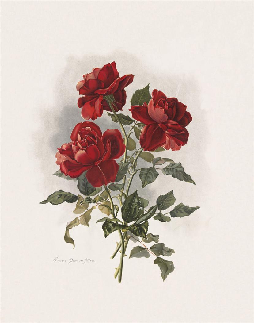 Рисуем открытку с цветами 994