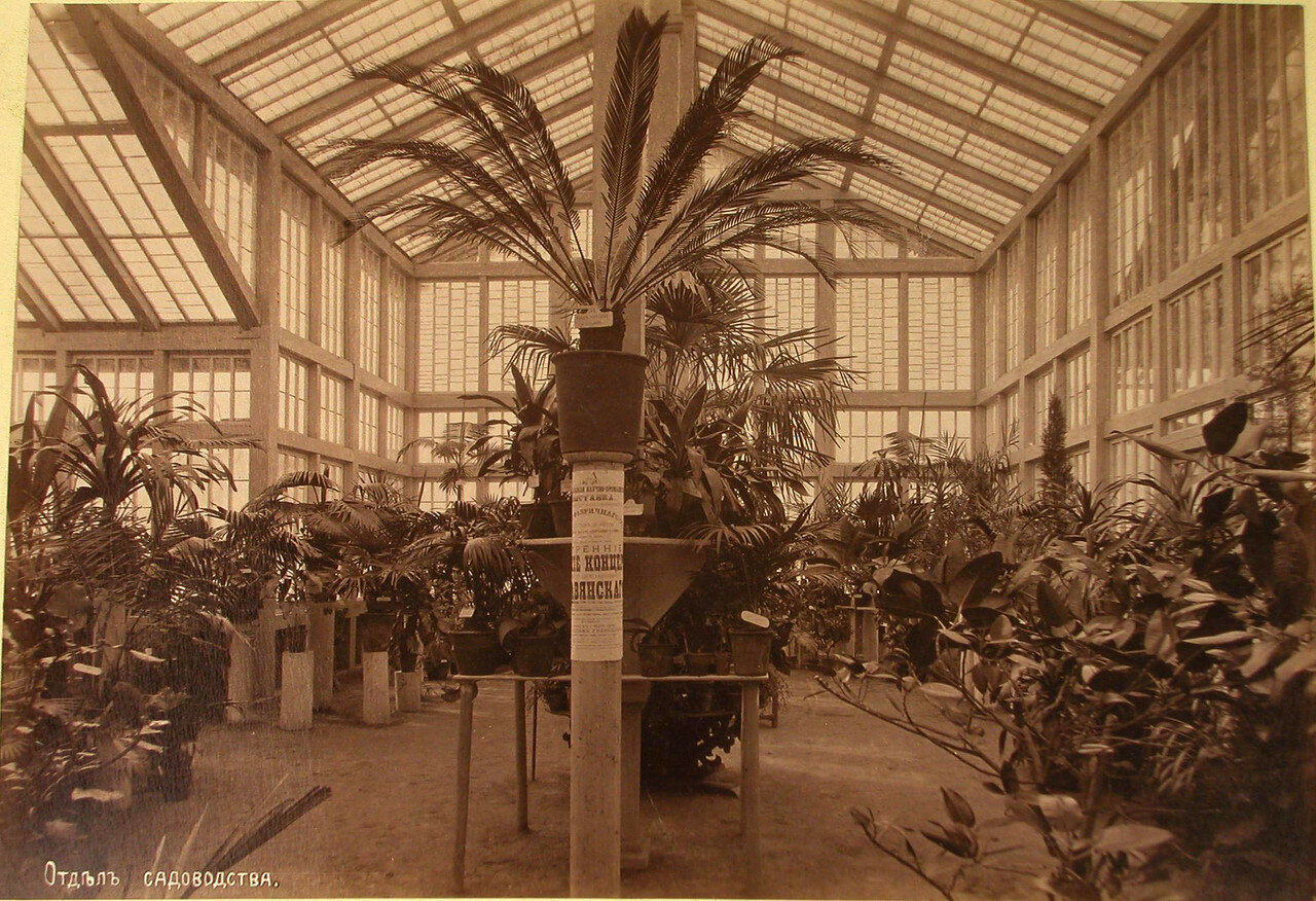 19. Вид одного из залов, где размещались экспонаты отдела садоводства