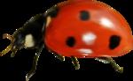 осенний мед (48)