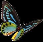Secret Garden Butterfly4.png