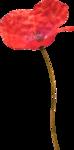 MaryPop_PoppyFields_el (4).PNG