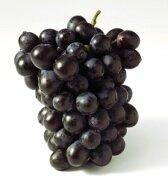 черный виноград_chernyj vinograd