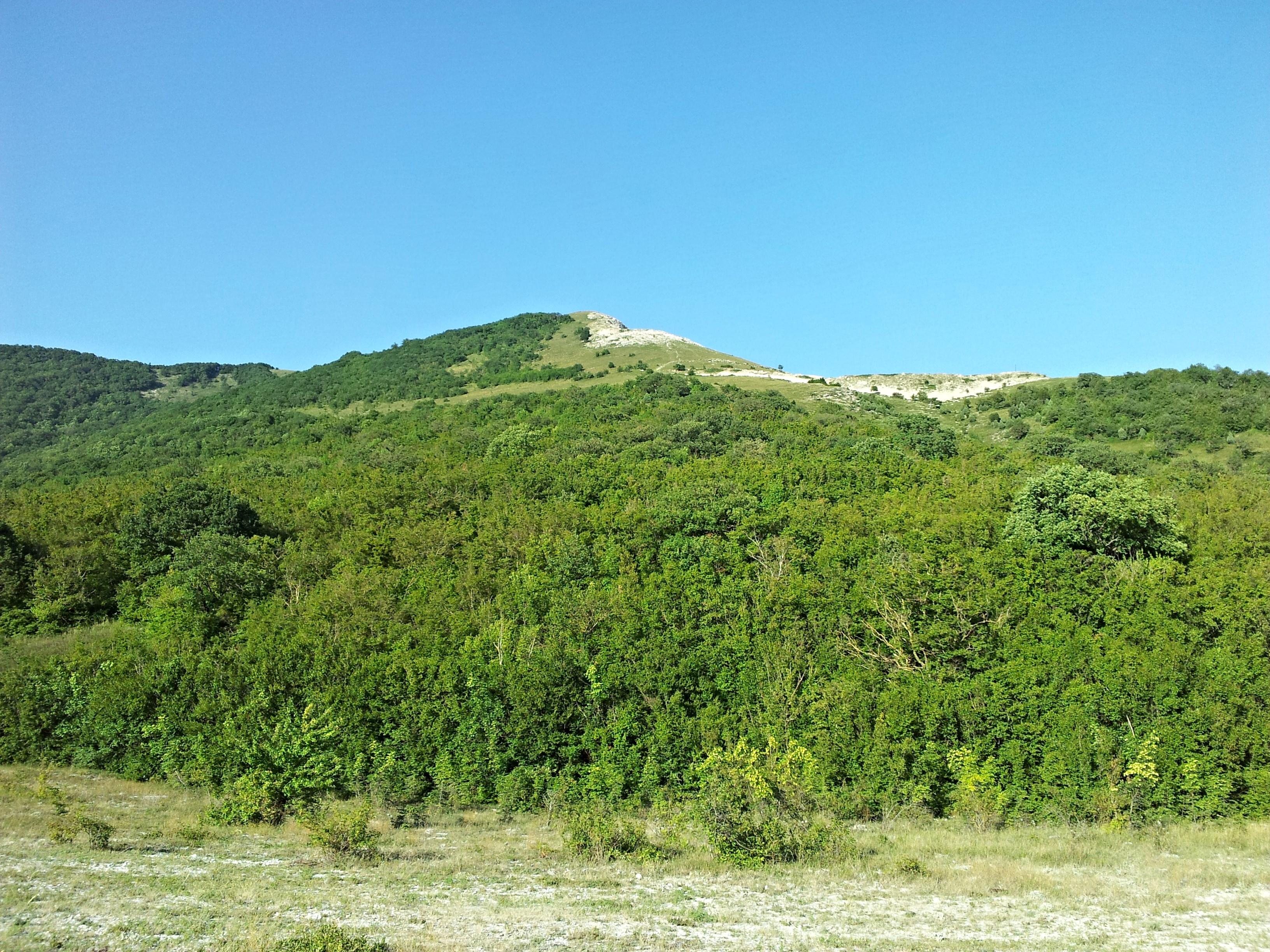 башкирское редколесье фото по-разному называют