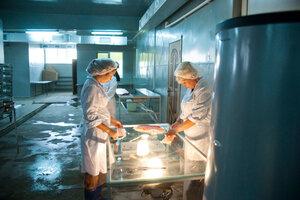 репортажная фотосъемка рыбного завода