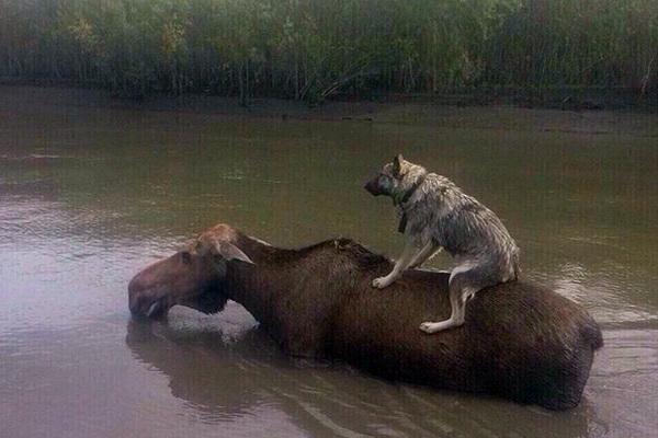 Взоопарке Уссурийска утонула медведица Масяня