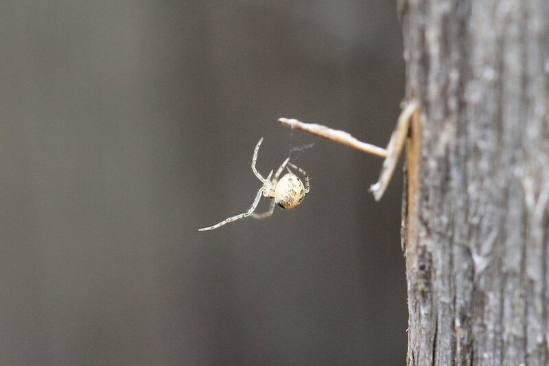 Маленький паучок плетёт свою паутину