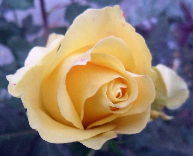 Цветы октябрьские