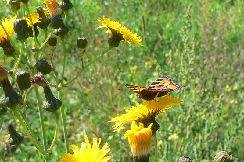 бабочка на желтом