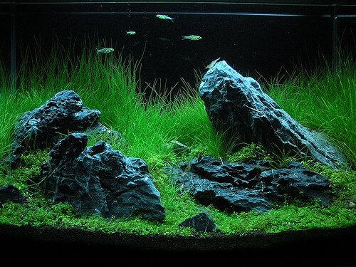 Nature   Aquarium Style.