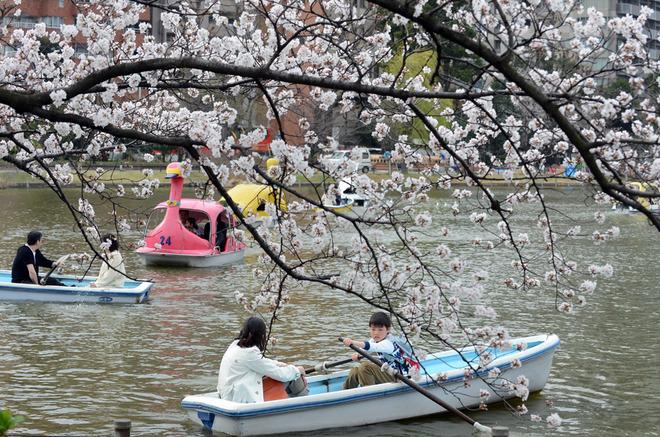 (6)JAPON-TOKIO-MEDIO AMBIENTE-FLORA
