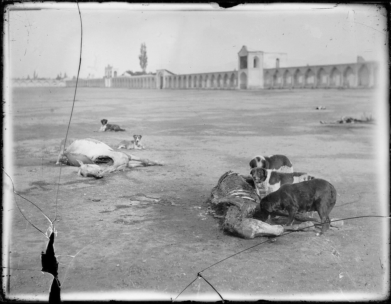Тегеран. Мертвая лошадь на центральной городской площади