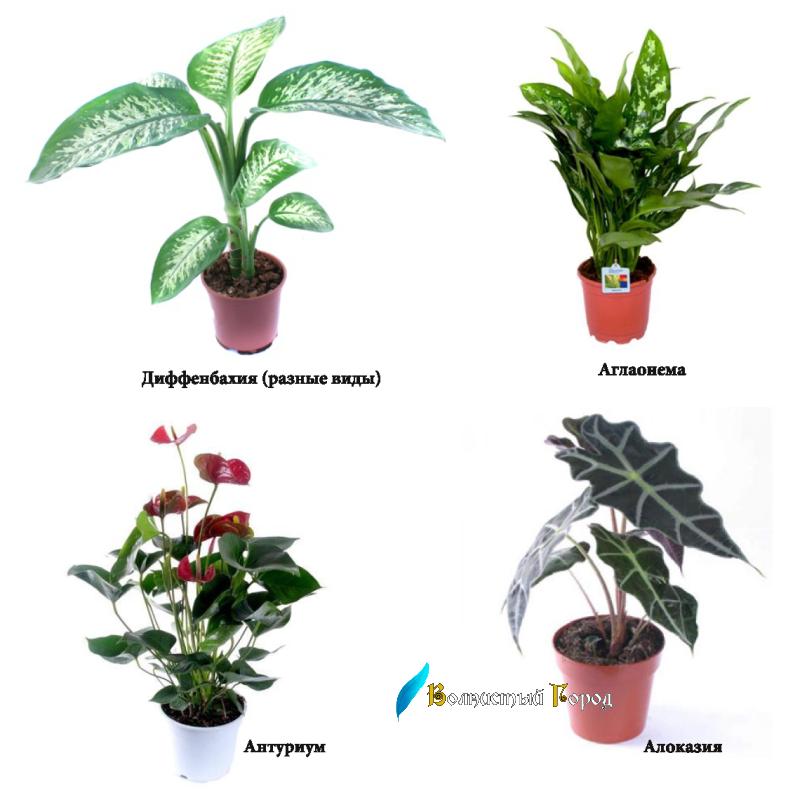 Фото ядовитых растений с названиями