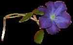 Secret Garden Flower2.png
