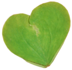Secret Garden Leaffy Heart.png