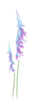 CF-OUAT_sussieM_ Enchanted-Forest_Element20.png