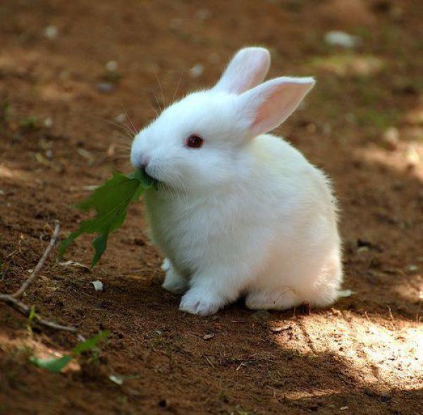 Забавные животные...:) http://img-fotki.yandex.ru/get/5816/130422193.31/0_684d8_89e548db_orig