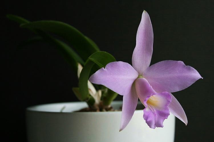 Растения полученные из Тюмени. Отзывы, хвасты!!! 0_7c191_4d7dd797_orig