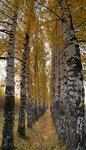 2011.10.09 Богданка и ЮЗР