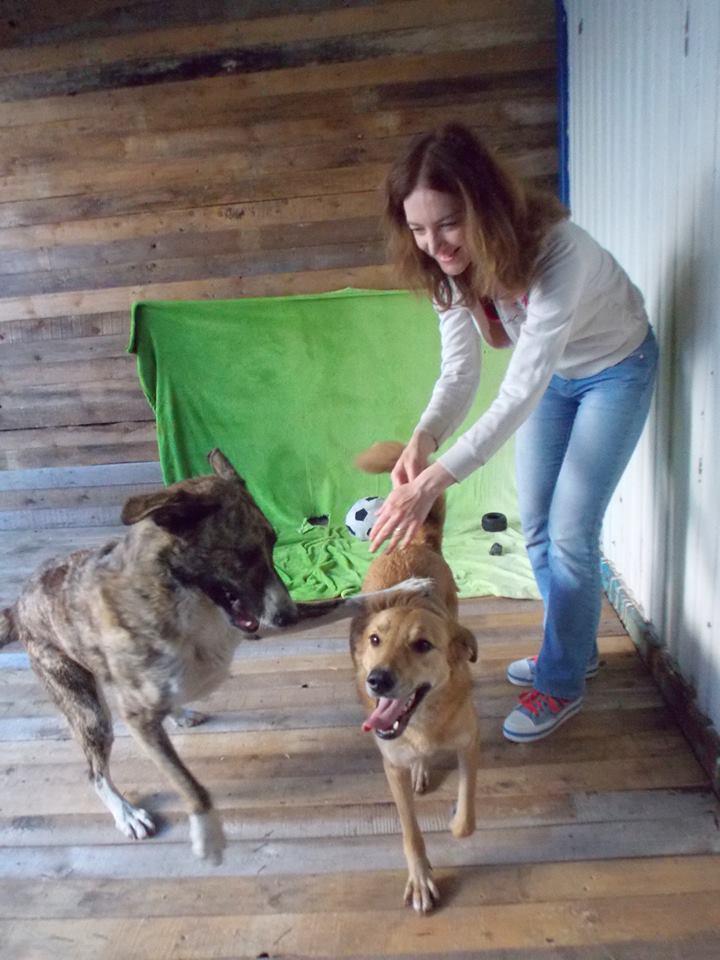 Рыжуля собака из приюта догпорт