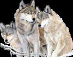Myst~2DoniKendig~Wolves.png