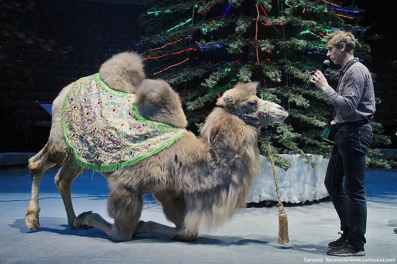 Зима. Цирк. Вещий сон. 16.12.15.06..jpg