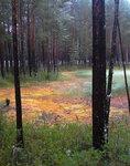 Странное болото
