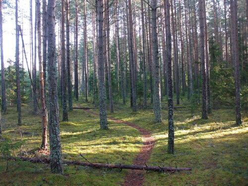 Любимый лес