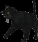 rs_blackcat10.png