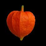 волшебная осень (67)