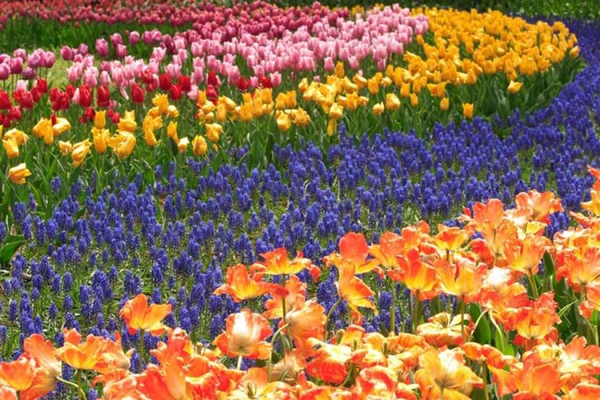 Живописный японский парк Хитати Кайхин 0 1422c2 2e00d507 orig