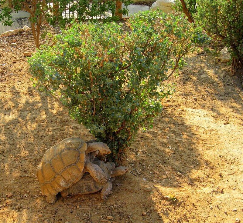 Сафари парк в тунисе