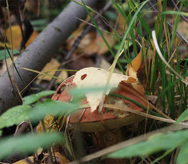 грибы-грибочки...