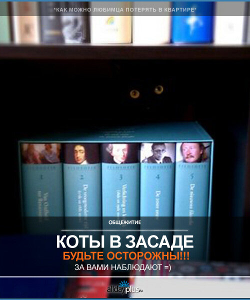 Коты шпионы - мы их не видим, а они наблюдают...