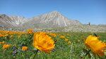 Лучше гор есть только горы на которых еще не бывал?