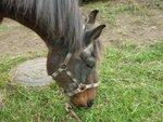 Спасенные лошади ищут свой дом