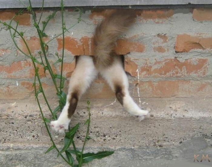 ним можно почему кошка подымает хвост и ссыт сколько энергии нужно