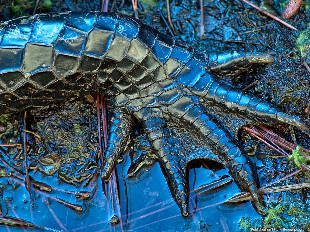 Лучшие фотографии за октябрь 2011 от National Geographic