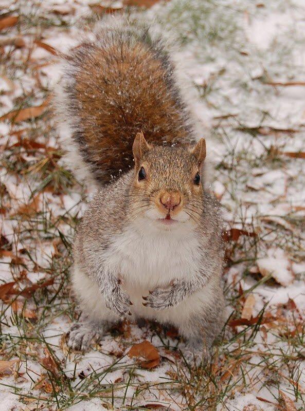 к зиме готовы?