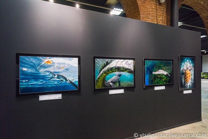 Рептилии. Фестиваль дикой природы Золотая черепаха 2015.