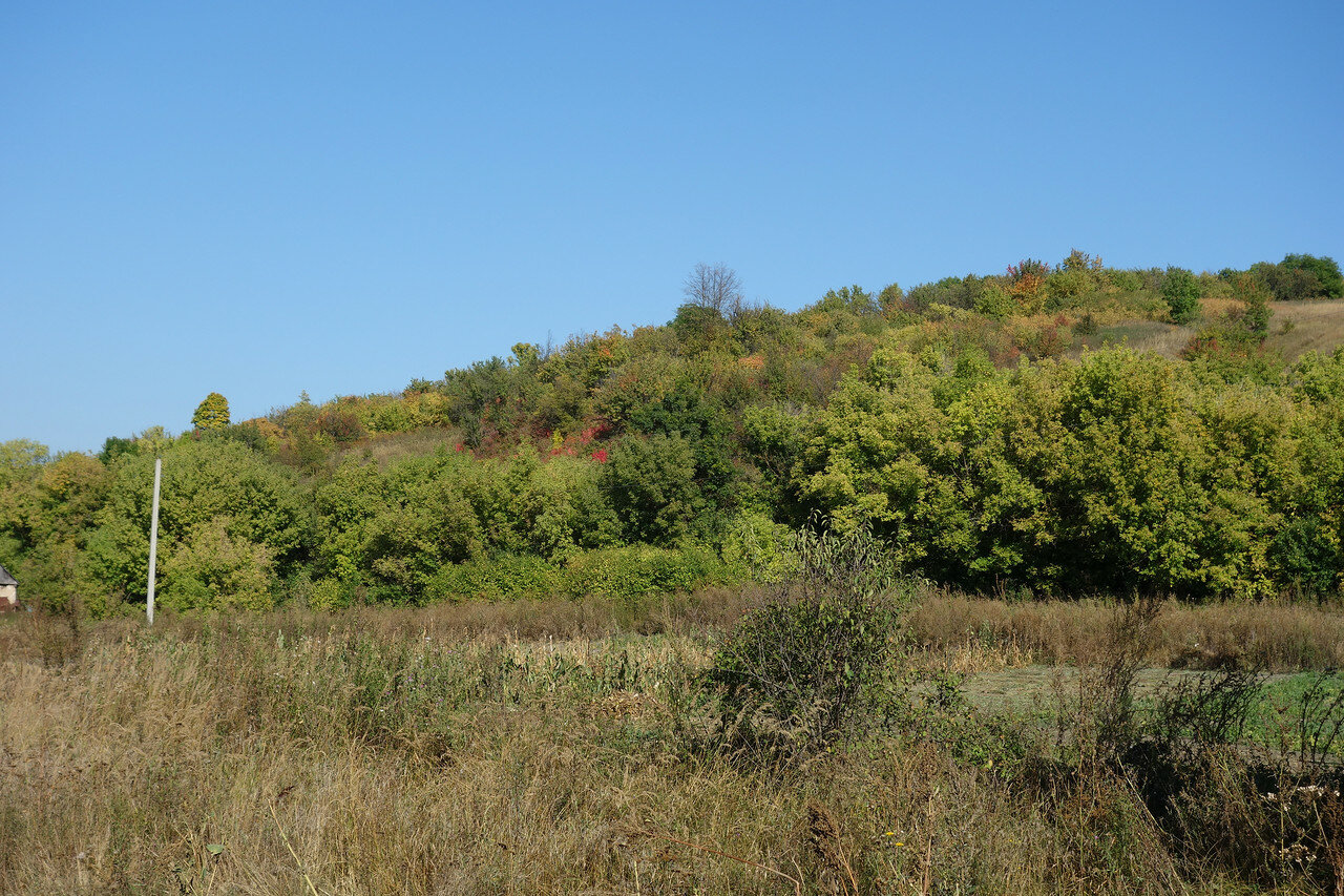 поросший кустами холм в Белогорье