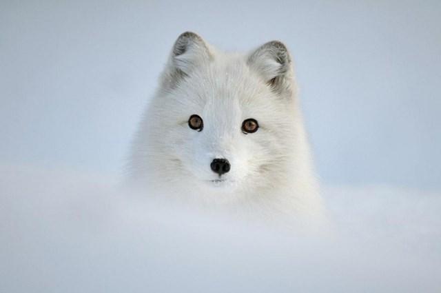 100 самых красивых зимних фотографии: пейзажи, звери и вообще 0 10f5d2 4015f815 orig