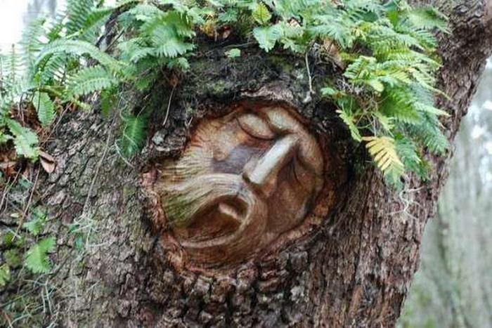 живое дерево.jpg