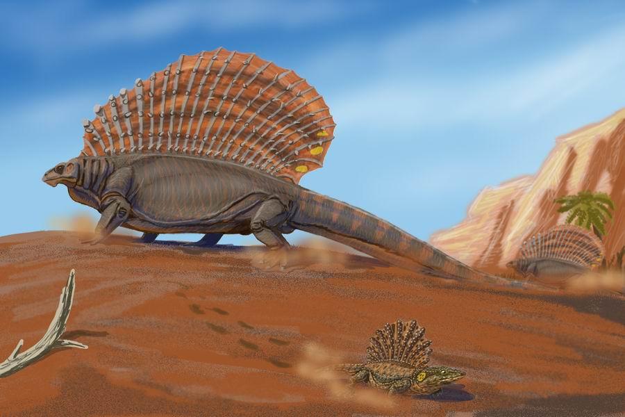 10. Diictodon Diictodon — это род терапсид, размером примерно 45 см. Он принадлежал к группе Dicynod