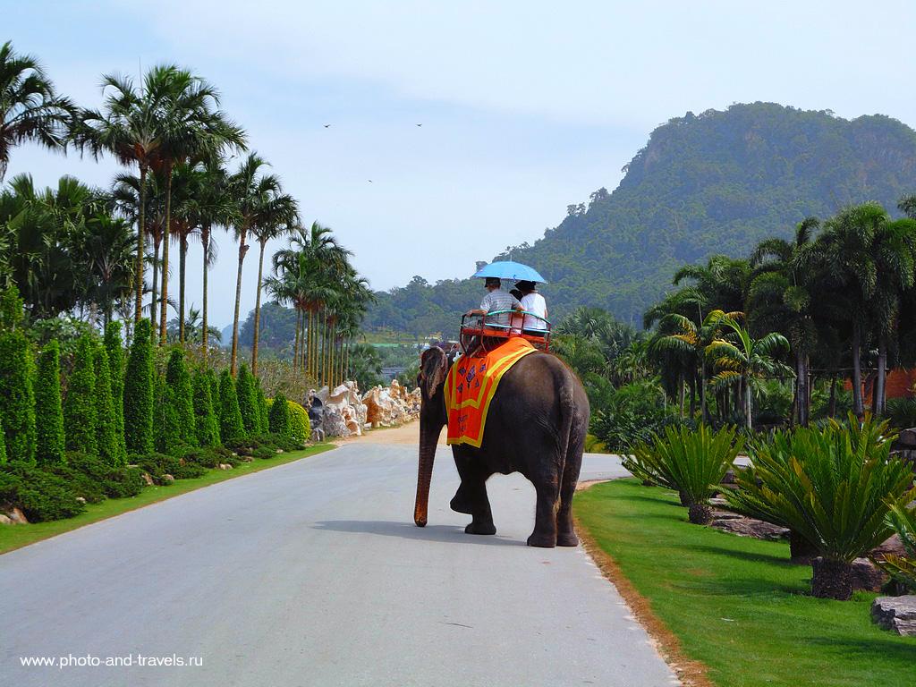 7. В парке Нонг Нуч туристы могут покататься на слонах. Отчет о поездке в Таиланд дикарями.