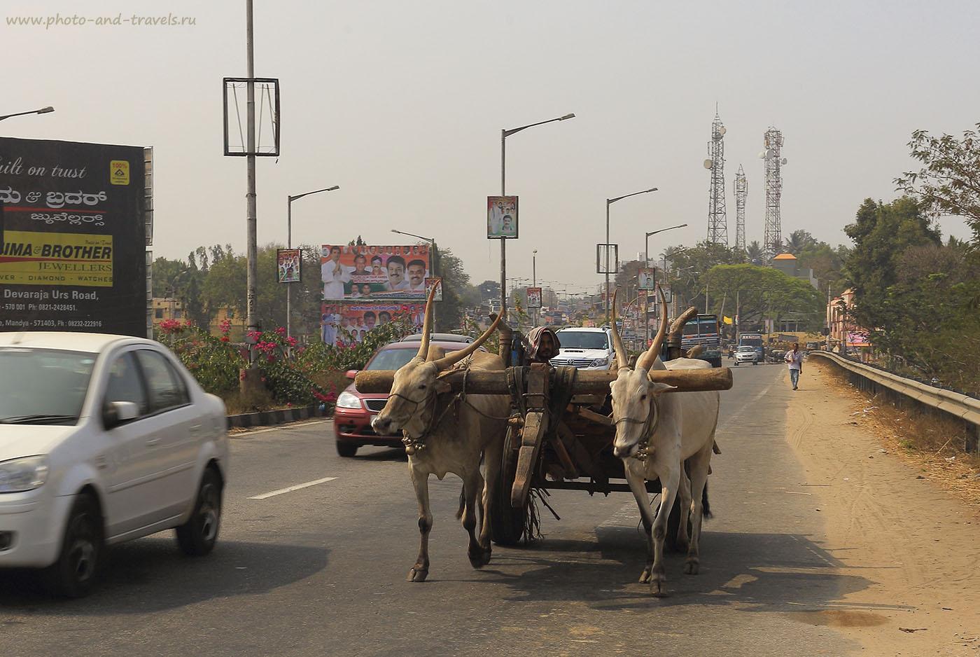 Фотография 11. Бычья упряжка на дороге для Индии – обыденность, для нас – достопримечательность. Отчеты туристов о приключениях в Карнатаке. 1/60, -1 EV, 14.0, 100, 40